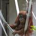Caroline hängt in den Seilen (Wilhelma)