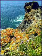 Cornish coastal colours, St Agnes' Head,