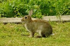 kaninchenprinzessin