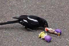 Explored - Angriff des Killervogels (Wilhelma)