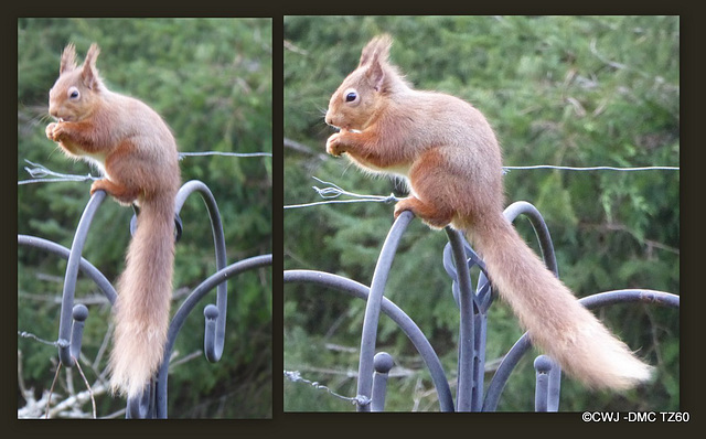 It is no mean feat to remain perched on top of a railing munching on a peanut, when it is gusting to 70 mph...