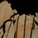 Pompeii X-Pro1 4