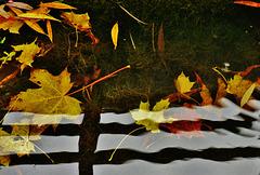 Der Herbst vergeht ... Autumn passes...