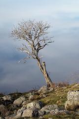 Un arbre en hiver.