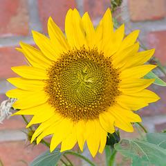 IMG 2993 Fleur