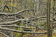 Thicket – Cunningham Falls State Park, Thurmont, Maryland