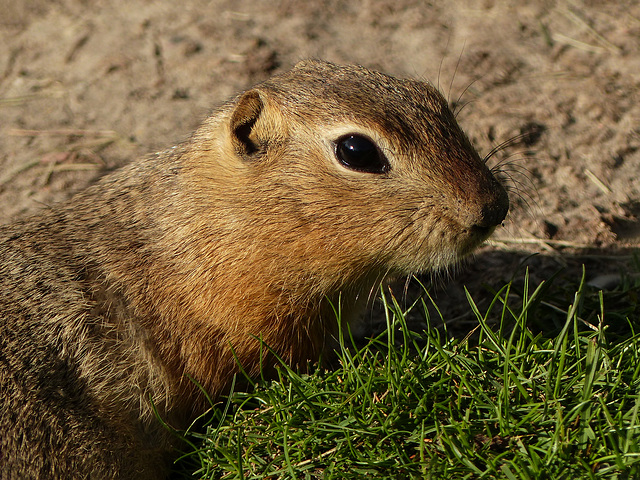 Don't call me 'Gopher'