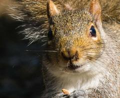 Squirrel (4)