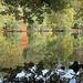Miroir d'étang en Sologne.