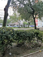Small garden between Benfica's blocks - IV