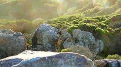 Rocks, bushes and big bokeh
