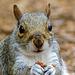 Squirrel (5)