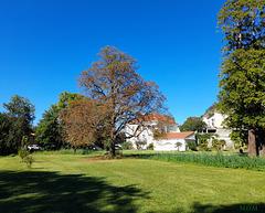 Une vue du parc du Bosquet devant chez moi**************