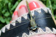 la belle libellule s'est posée sur mon pied