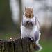 Squirrel (6)