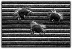 Punky seeds ,version noir et blanc 2