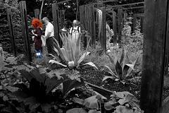 le jardin des sorcières