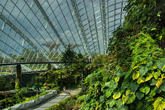 Cloud Forest conservatory in the Gardens by the Bay, Singapore