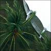 Palm Underneath