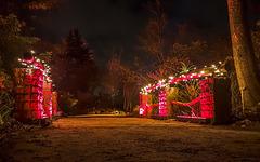Botanischer Garten Berlin - Christmas Garden