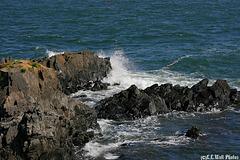 West Quoddy Rocks & Surf (3)