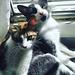 Pascha and Roxy, Mandi's little kittens