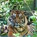 Visite au zoo de Beauval
