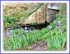 Irises In Moana-nui Lake Park.