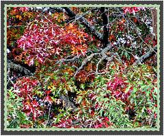 Multi-coloured Leaves.