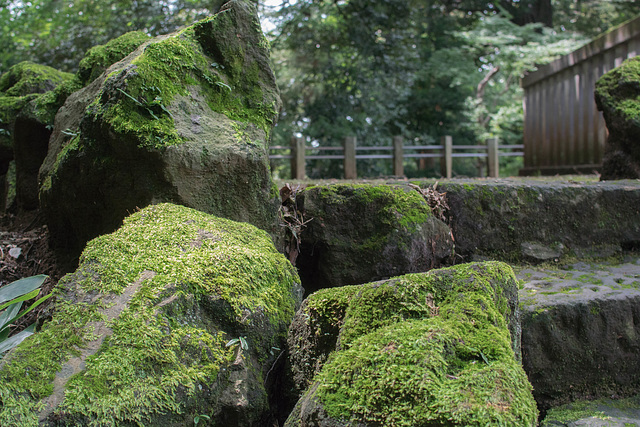 Mossy place