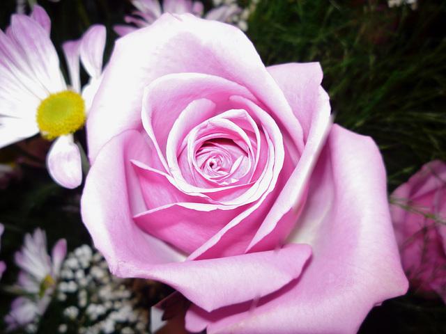 L'important c'est la rose....