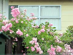 Rose Window.
