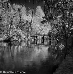 Hillsborough River State Park 009