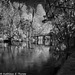 Hillsborough River State Park 009