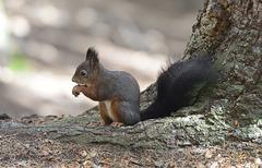 Rencontre d'un écureuil...