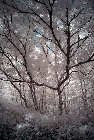 Into the woods with the fisheye in IR