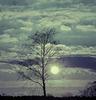 l'arbre i la lluna -  The tree and the moon  -  l'arbre et la lune