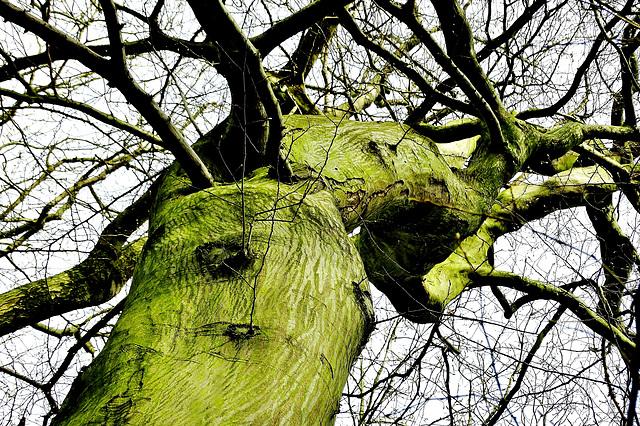 Tree With Bark