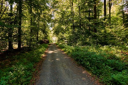 im taunus-waldweg-01461-co-11-09-16