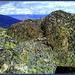 Granite and lichen II.