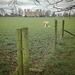 Do have a ''Happy fence Friday''... to everyone.. from 'Dj.. at 'Hardwick hall'