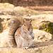 Squirrel 1 (4)