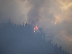 Record Forest Fire Year