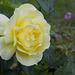 Rose test-5
