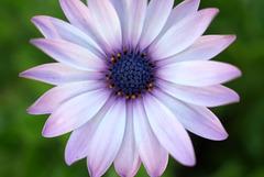 Fleur du Parc d'Epône