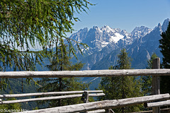 Blick über den Zaun - View over the fence