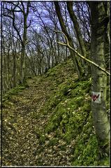 LWW Steinsberg