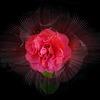 Fleur captive