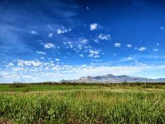 The Riparian Zone & The Huachuca Mountains