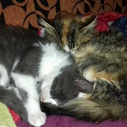 Pasha and Roxy snuggling in together